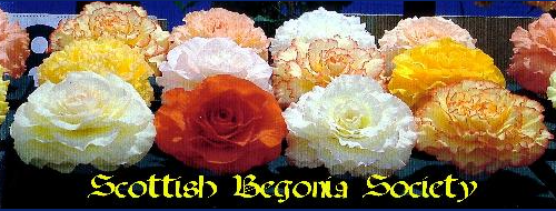 Scottish Begonia Society